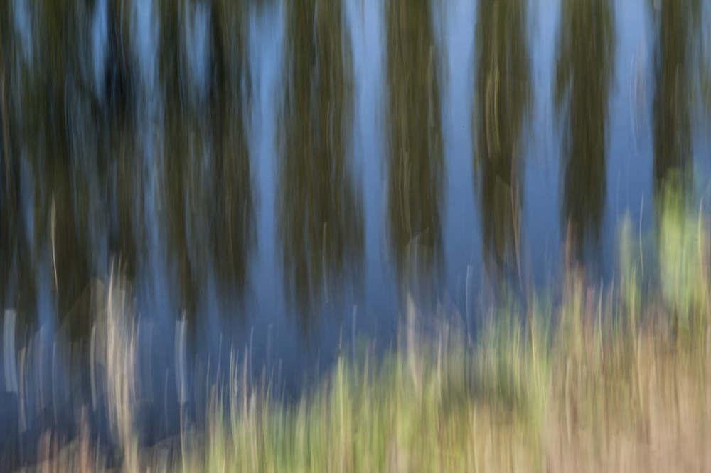 "Poplars - ISO100 |F29 | ""1 | at 100mm No filters"