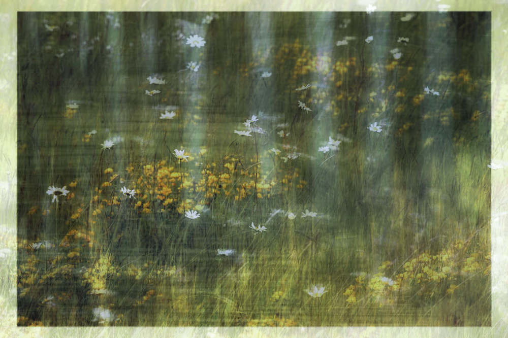 One of my early attempts at multiple exposure, of a wild meadow and then over layed with a water reflection.