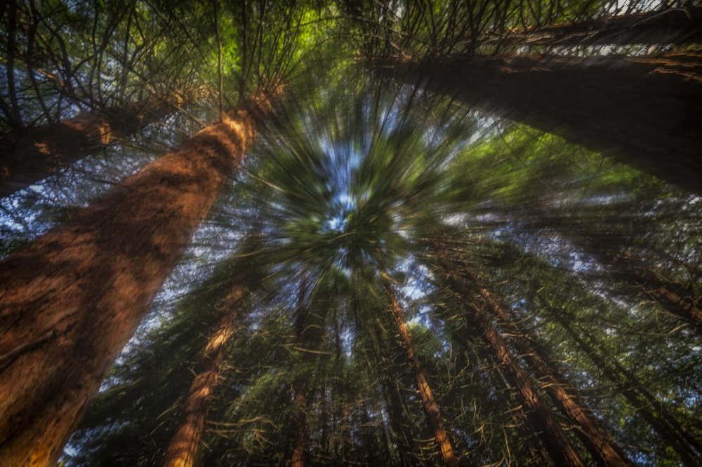 Tree Zoom -ISO100 |F22 | 0.6 | Zoom burst 16 to 35mm