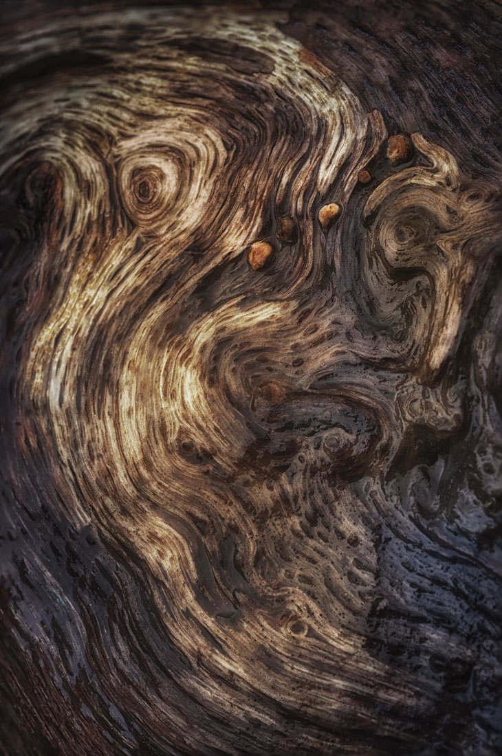 bark study 23