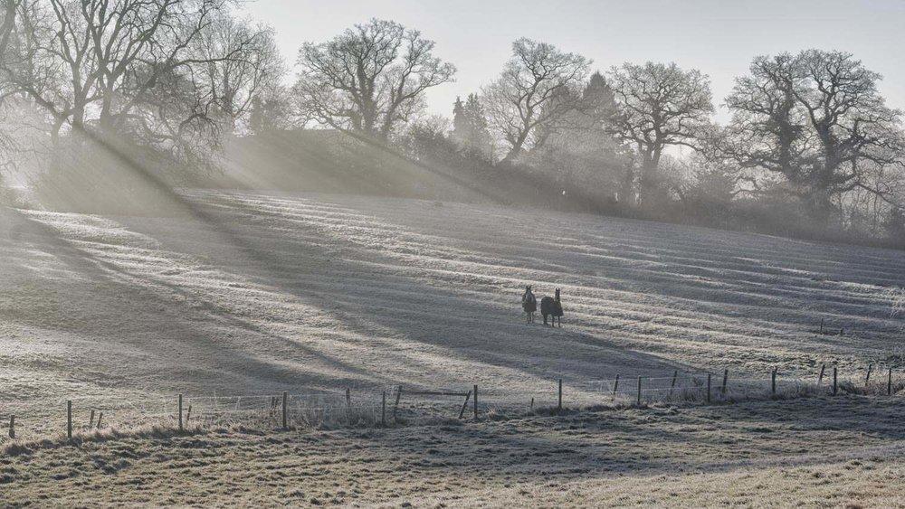 frosty grazing