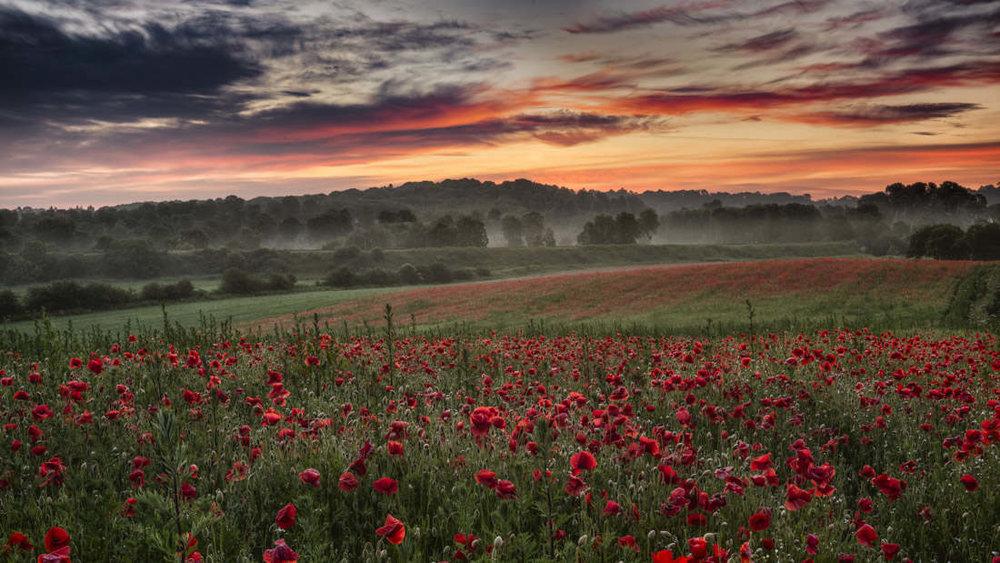 poppy sunrise