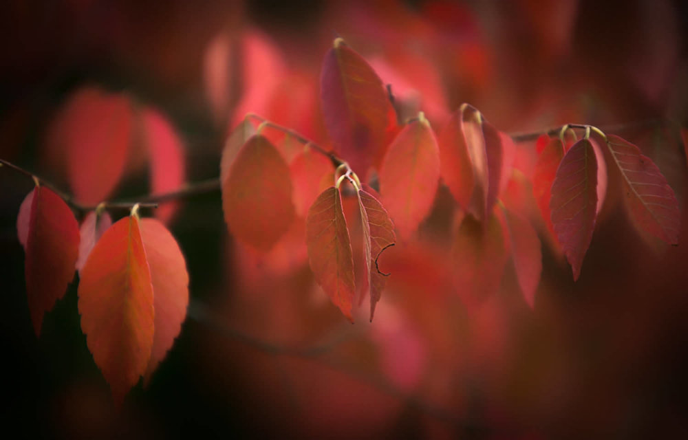 click on image for more photos from Batsford Photography Workshops