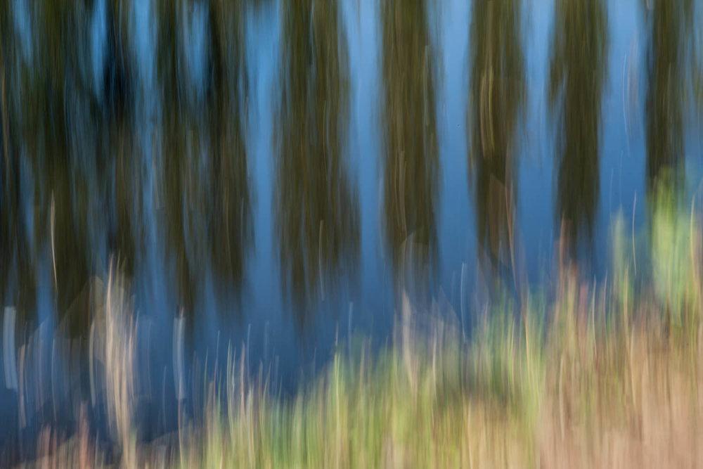 tree pan-Alan-Ranger-Photography.jpg