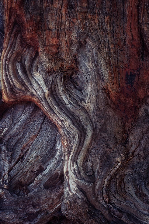 bark study 4
