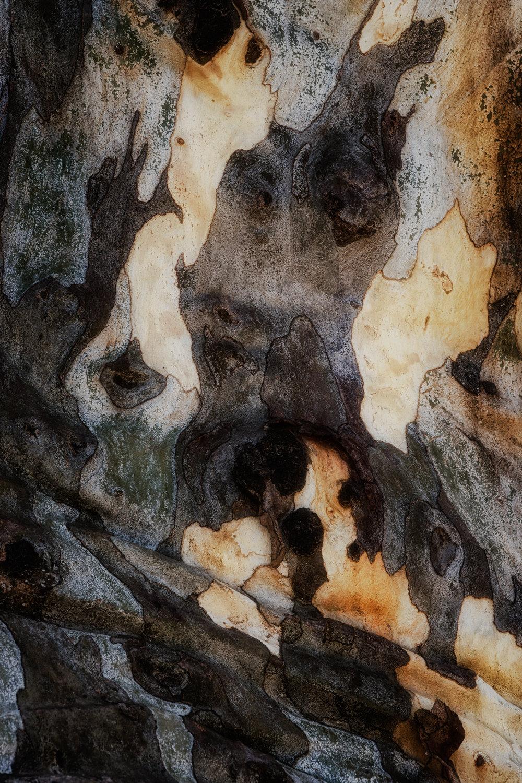 bark study 38