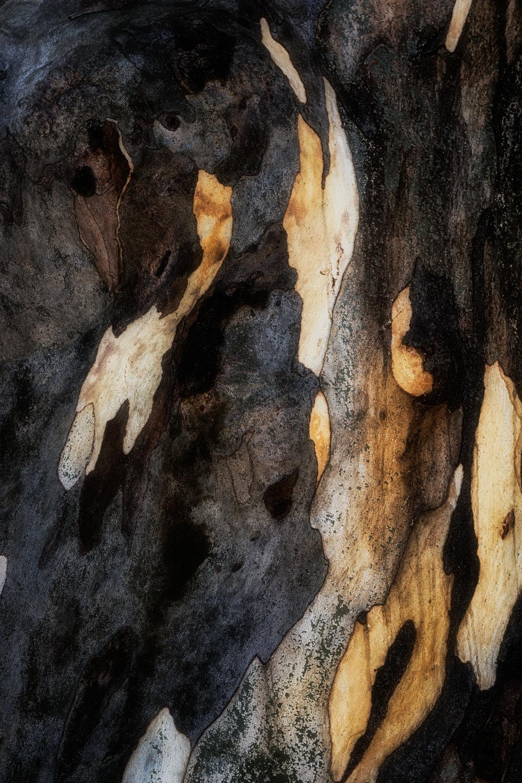 bark study 37