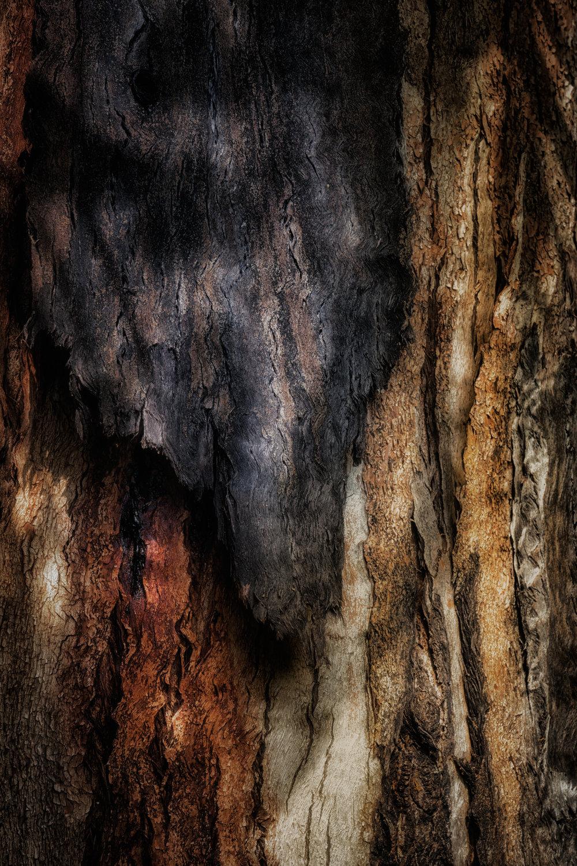 bark study 26