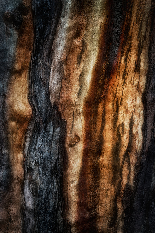 bark study 33
