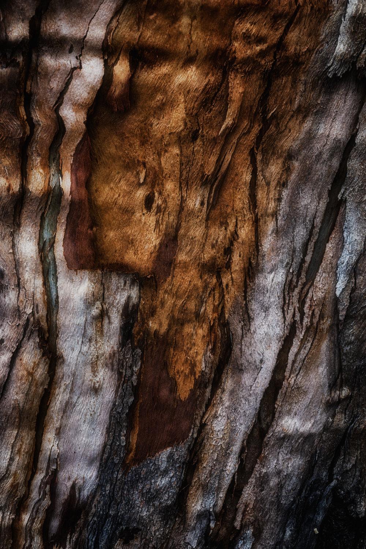 bark study 34