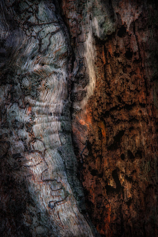 bark study 22