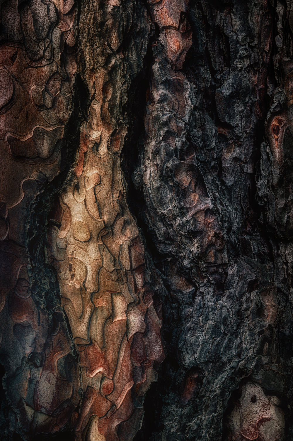 bark study 44