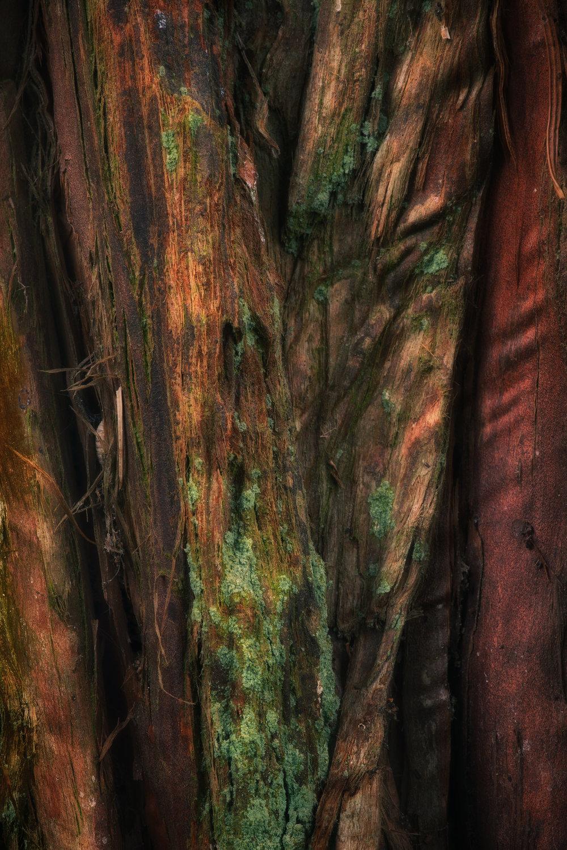 bark study 13