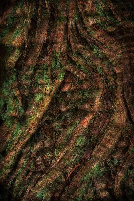 bark study 14