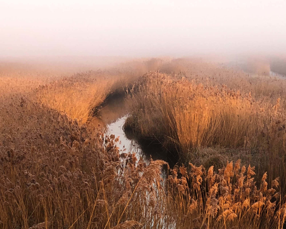 iPhone grab shot of reed beds at sunrise