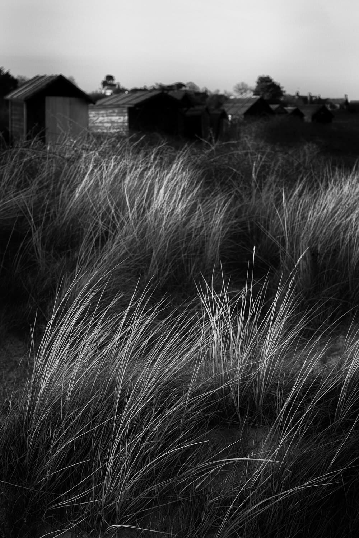 Walberswick Sand Dunes