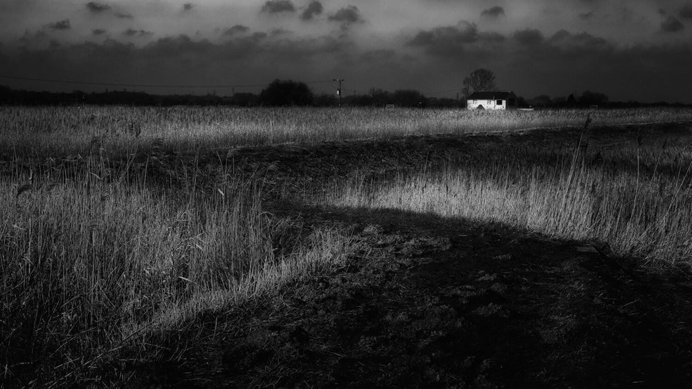 Herringfleet Reed Beds