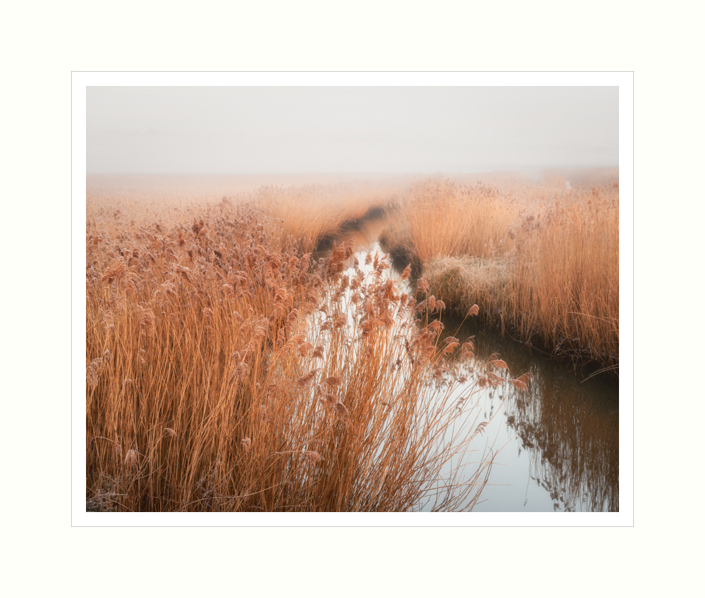 Hen Reed Beds