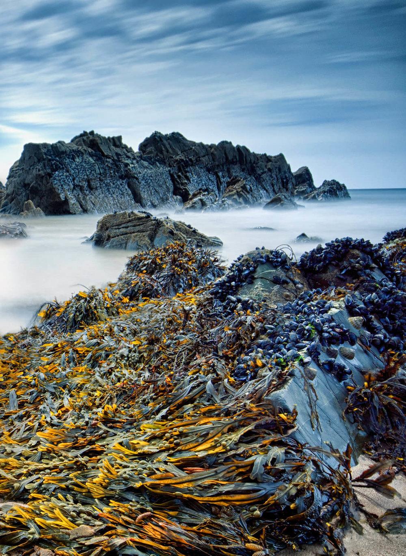 sandymouth spiral wrack-Alan-Ranger-Photography.jpg