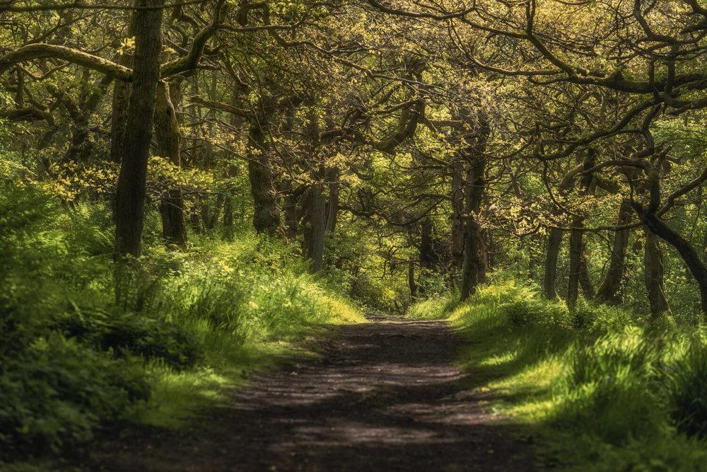 Crackely Woods