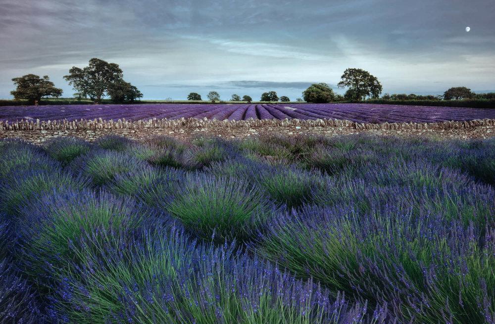 lavender-photography-workshop-Alan-Ranger-Photography.jpg