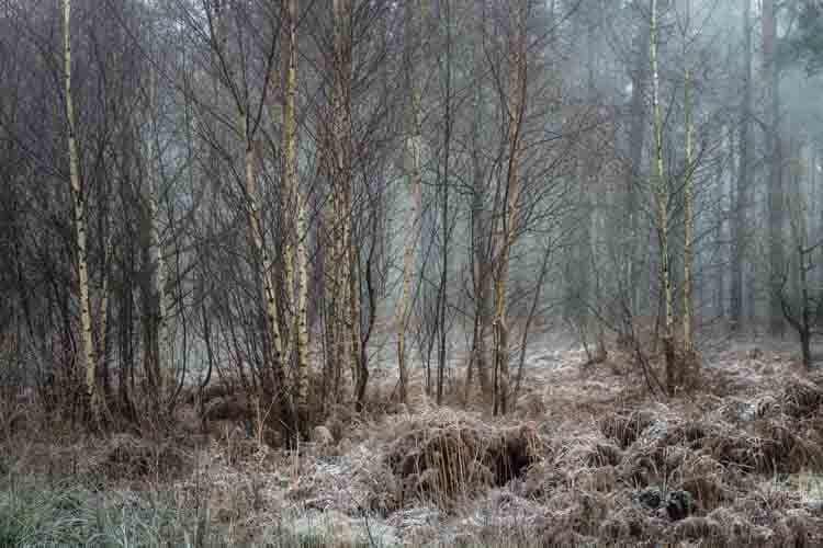 Hay woods