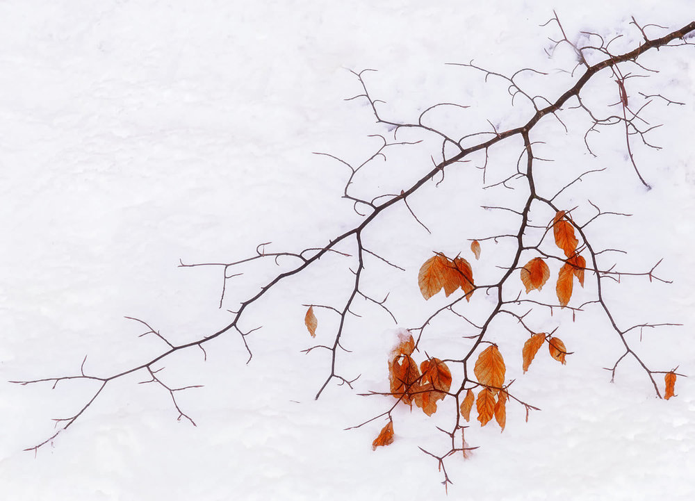winter gold-Alan-Ranger-Photography.jpg