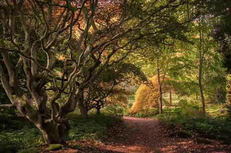 Batsford Arboretum -