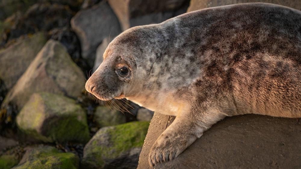 walberswick seal