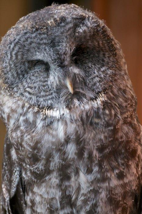 OwlFoundationBigBird2.jpg