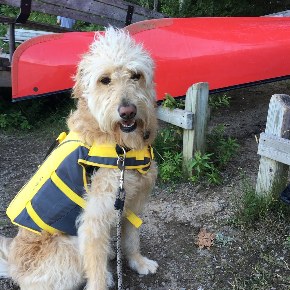 Julie Morris - Hadley getting ready for a canoe trip at Awenda Provincial Park in Ontario