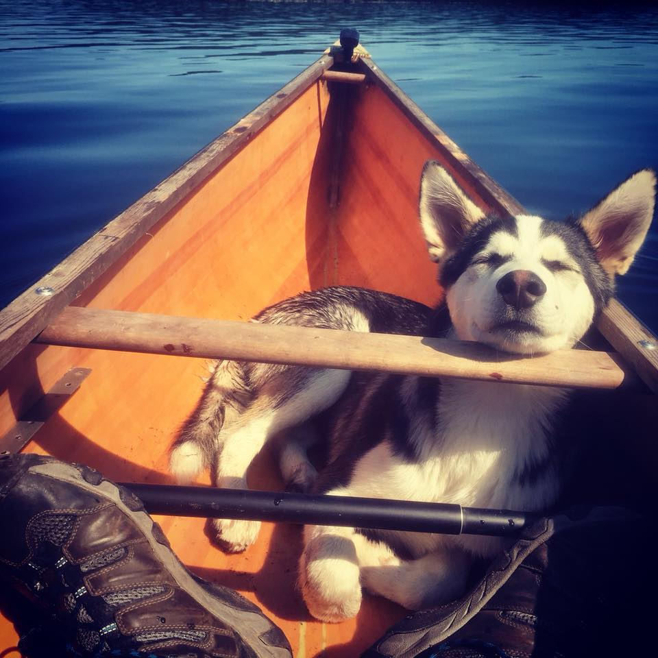 Dave Wilfong - My Lil Mojag out on Obabika lake...he's been canoeing since he was 6 weeks
