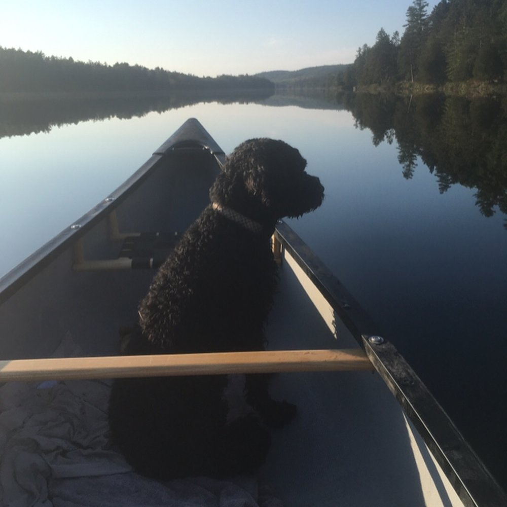 Mike Lennox - Petawawa River with my 1st mate (Zoey the Portuguese Water Dog) at the Bow!