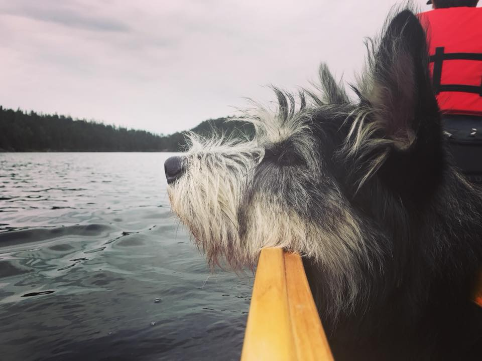 Lindsay - Lower Stewart Lake (Experimental Lakes Area) in Ontario. My dog Gus, who I've been paddling with since he was six months old