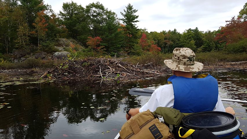 Tom Miller - Kawartha Highlands - Buzzard Lake - Stares at Beaver Lodges