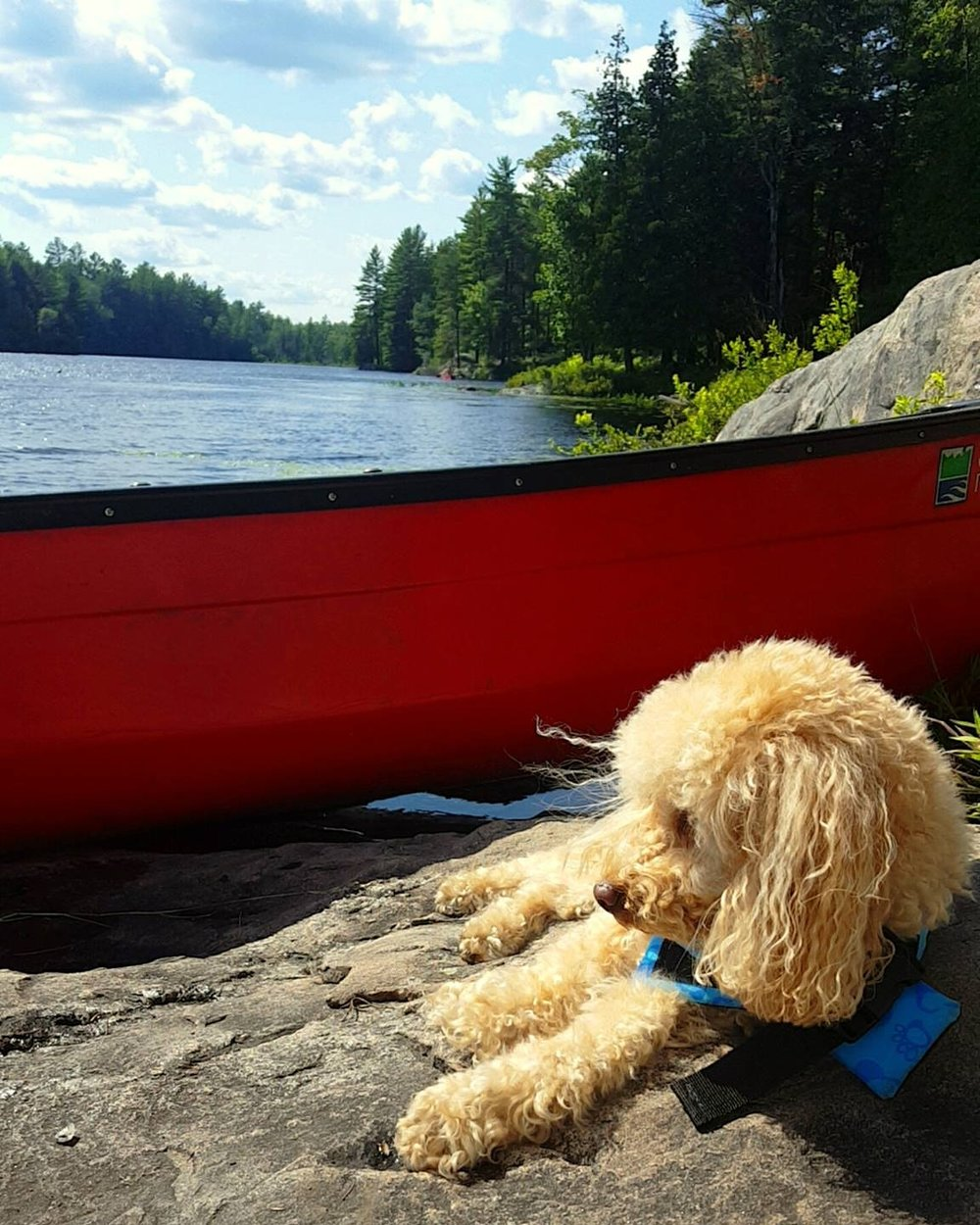 Sara Lavelle - Relaxing after a long paddle at Silent Lake -Bancroft Ontario