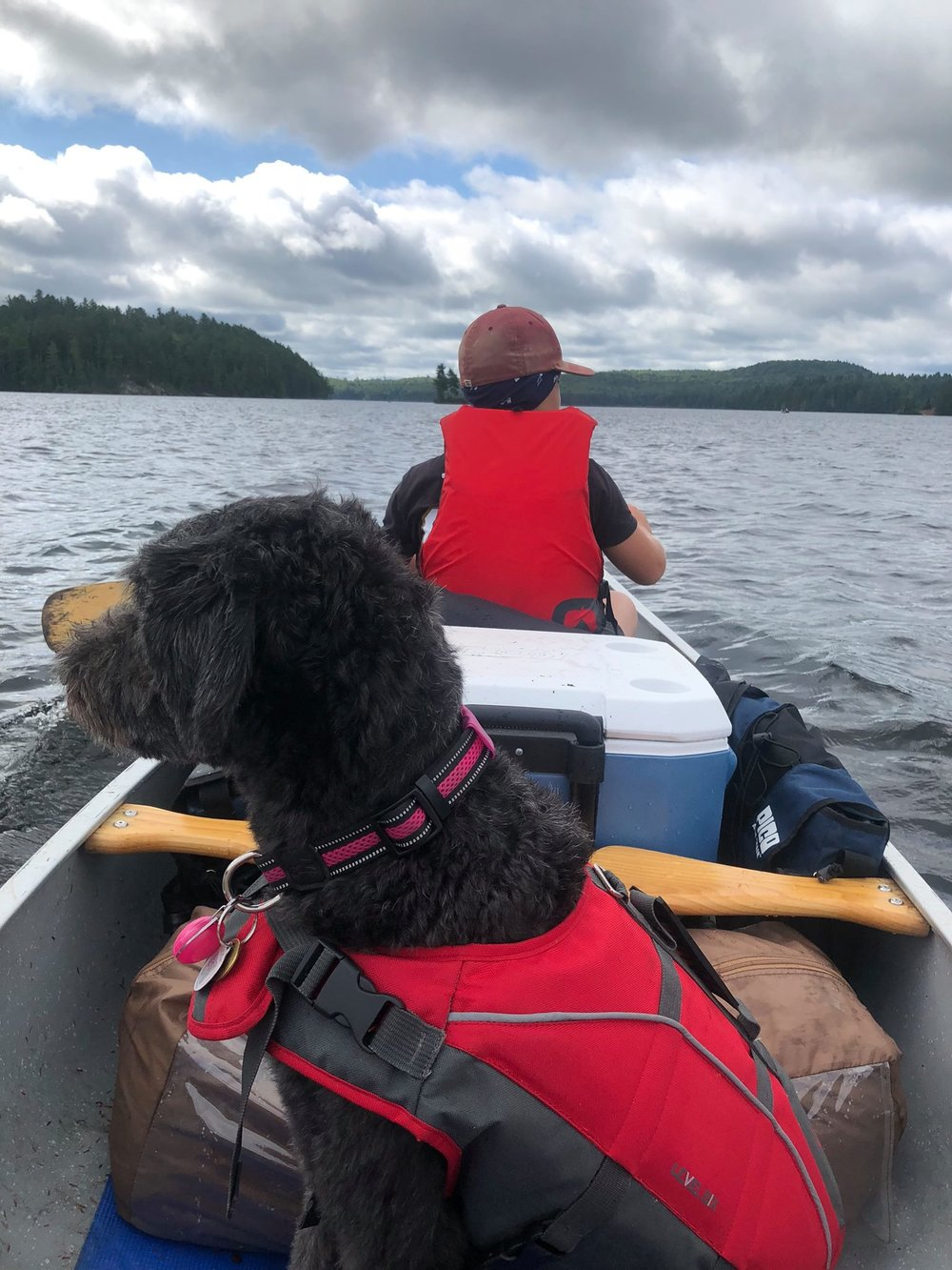 Pamela Fellbaum - Navigating the waters of Opeongo Lake in Algonquin Park - 10 year old at the helm and my dog Biscuit keeping a watchful eye on the other canoes in our party.