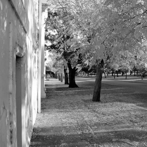 Leafy Monastery Road (1).jpg