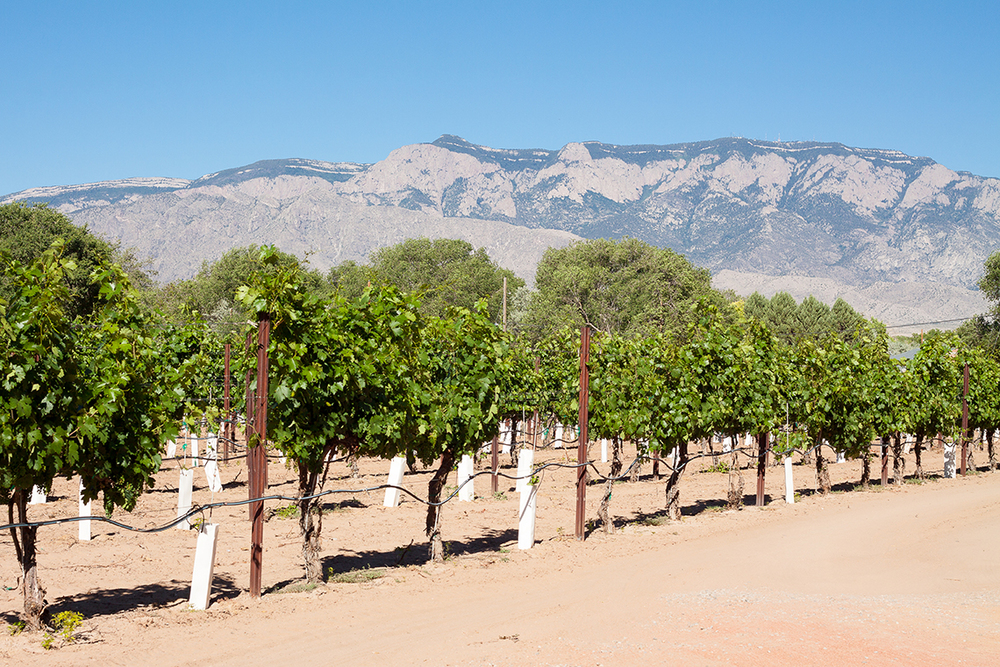 Milagro Vineyards in Corrales, New Mexico - Photo by Stephanie Camerion