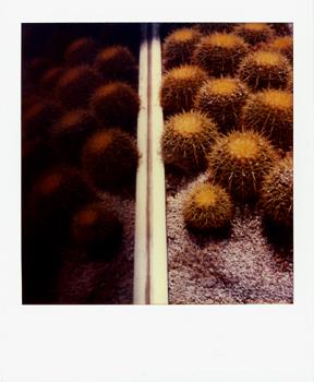 Polaroid_SX70_XczL84_10.jpg