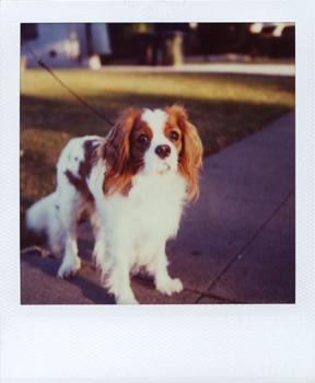 Polaroid_SX70_XczL84_23.jpg