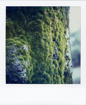 Polaroid_SX70_XczL84_24.jpg