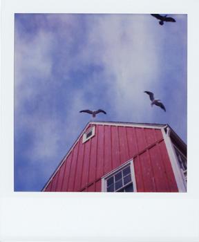 Polaroid_SX70_XczL84_30.jpg