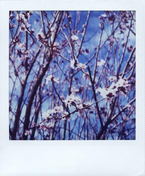 Polaroid_SX70_XczL84_38.jpg