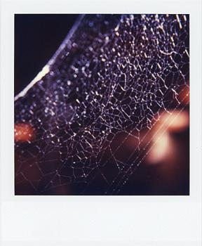 Polaroid_SX70_XczL84_41.jpg