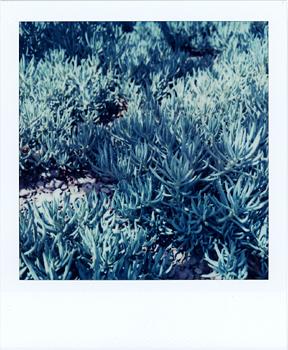 Polaroid_SX70_10_Cactus.jpg