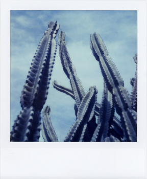 Polaroid_SX70_21_Cactus.jpg