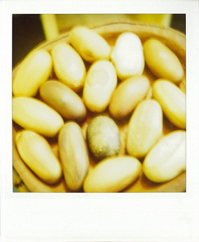 Polaroid_SX70_600_2_wood_eggs.jpg.jpg