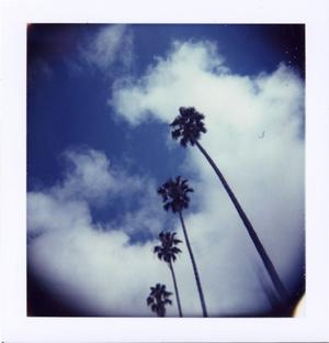 Polaroid_05_holga_4palm.jpg.jpg