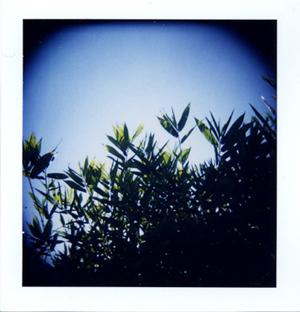 Polaroid_06_holga_bamboo.jpg.jpg